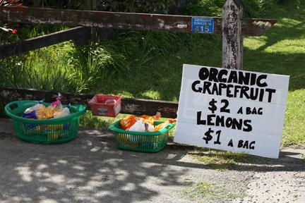 fruit-for-sale.jpg